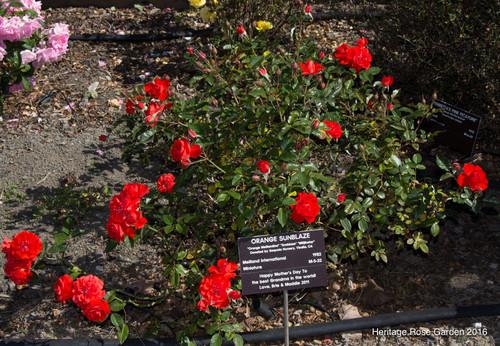 san jose heritage rose garden part 1 japanese home garden design san francisco bay area bio