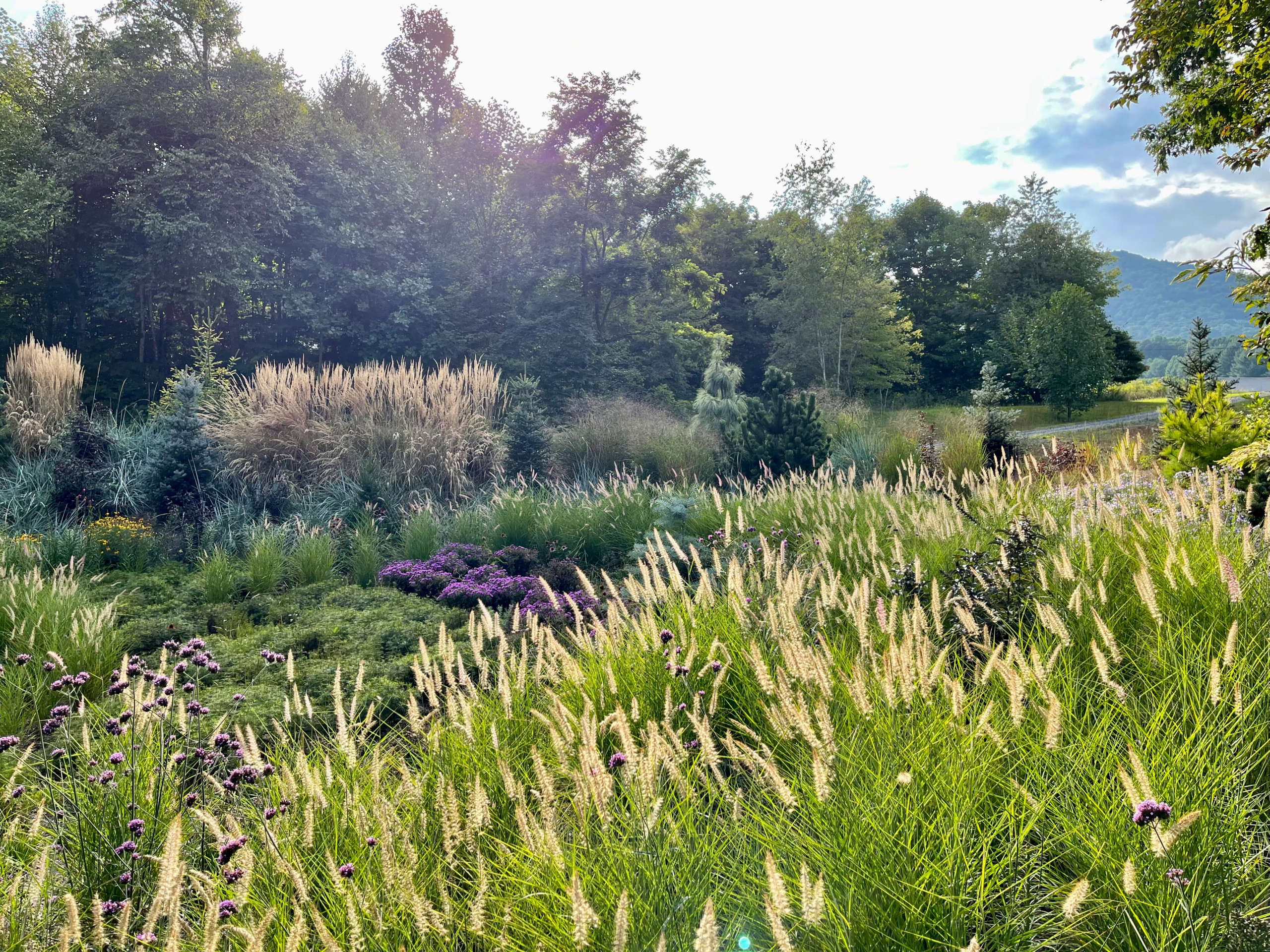 Fall view:  late afternoon backlighting