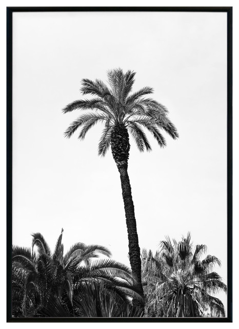 Summer Palm Trees in Black and White\