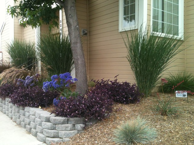 Naples ca low water low maintenance with space between for Low maintenance lawn design