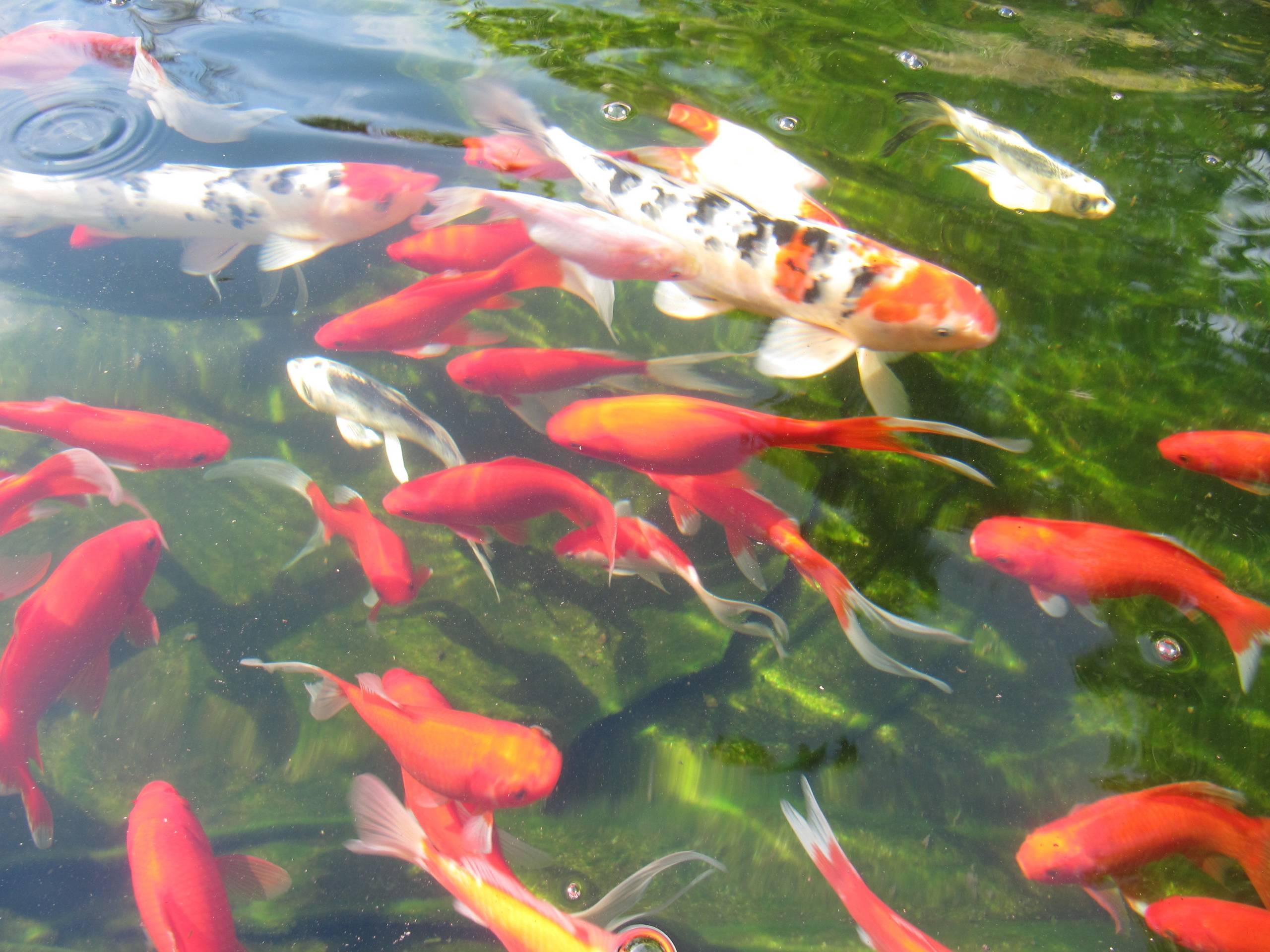 Littlefield Farm: Koi Pond Progression