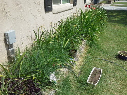 Grass in my flower bed for Grasses for flower beds