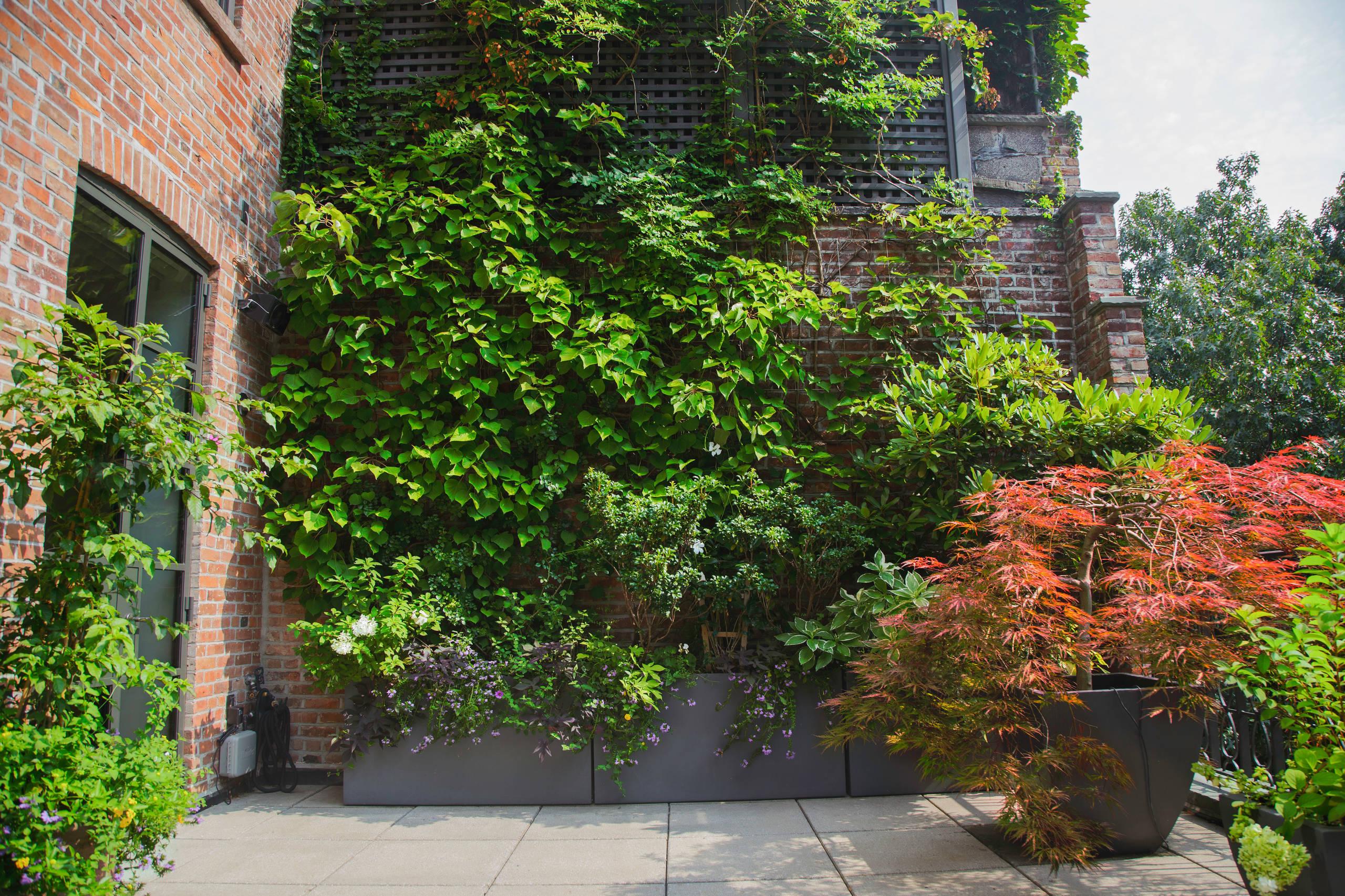 Willow Street, Brownstone Brooklyn