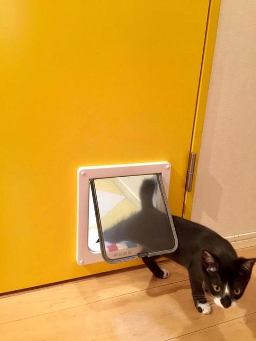 【Houzz】猫と人の幸せな暮らし:イラストレーター石川三千花さん、愛猫ネコゾーと暮らす日々 5番目の画像
