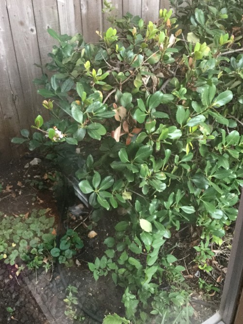 This should be easy flowering shrub mightylinksfo