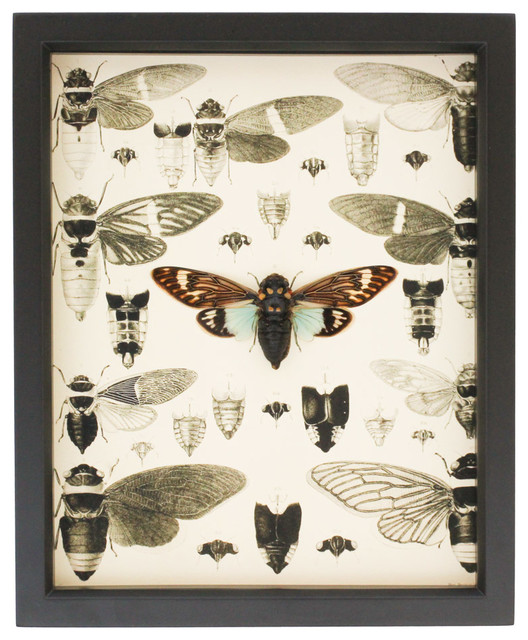 Victorian Insect Print And Insect Display Contemporary
