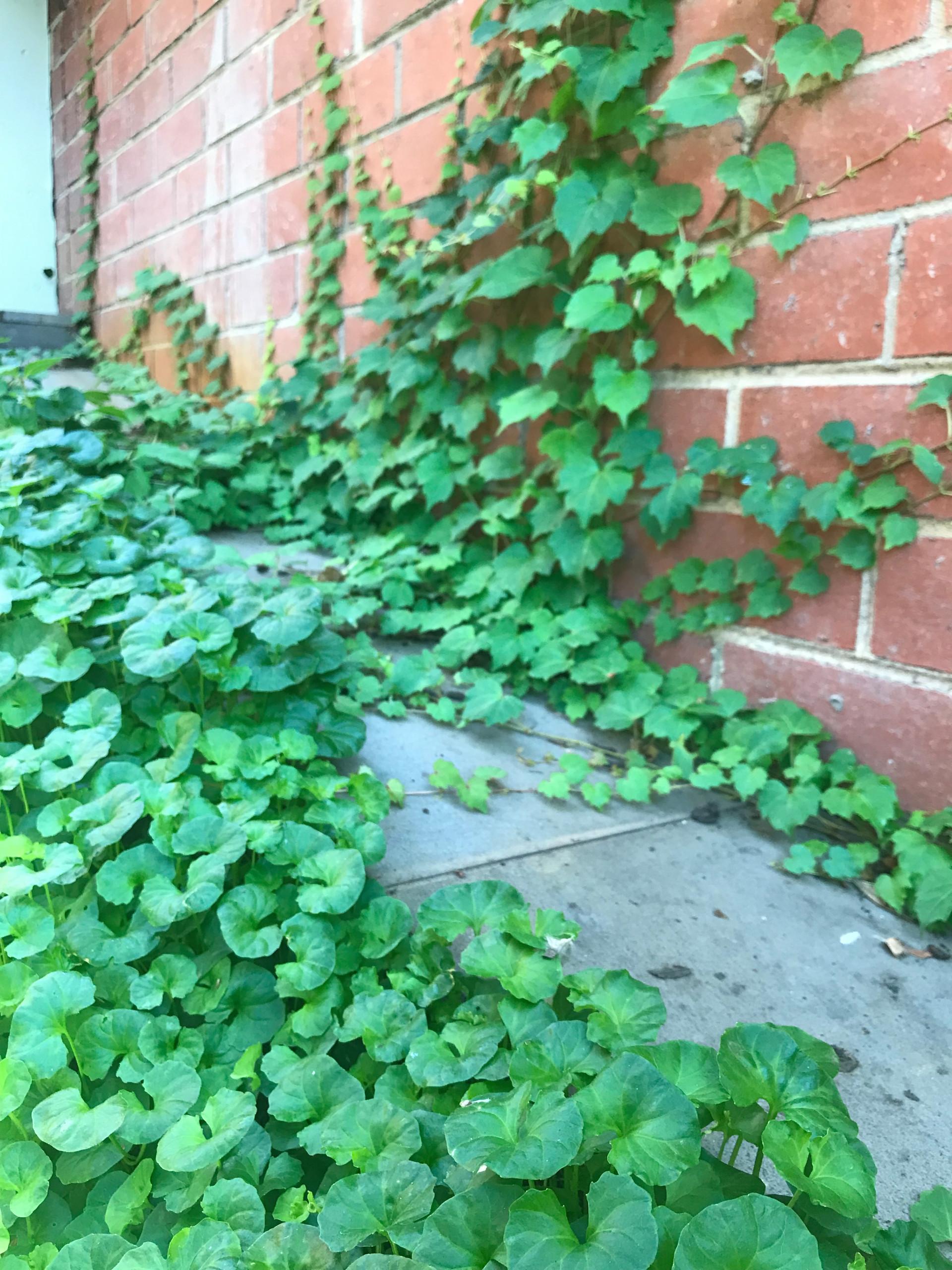 Clifton Hill 'Scarborough' Back Garden