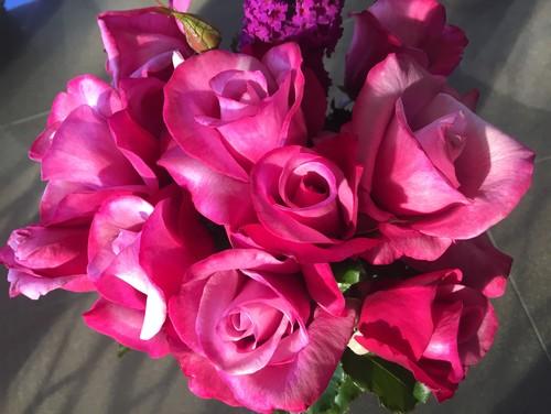 augusta luise - Fragrant Roses