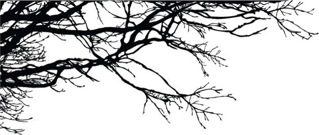 Tree Top Branches Wall Decal. -1