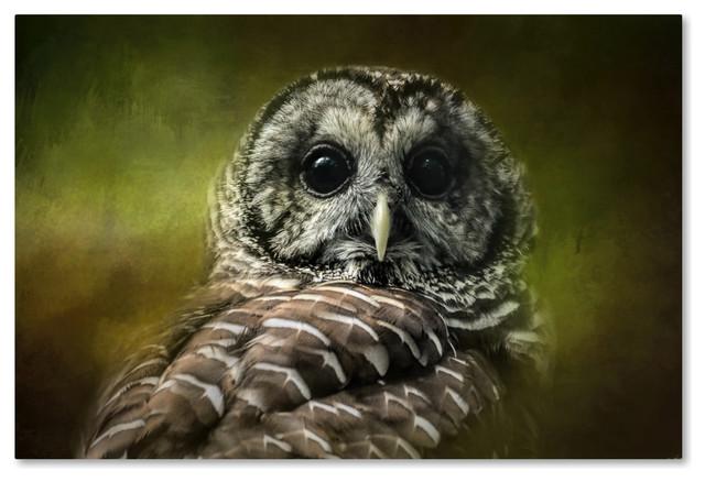 Jai Johnson &x27;barred Owl In The Grove&x27; Canvas Art, 47 X 30.