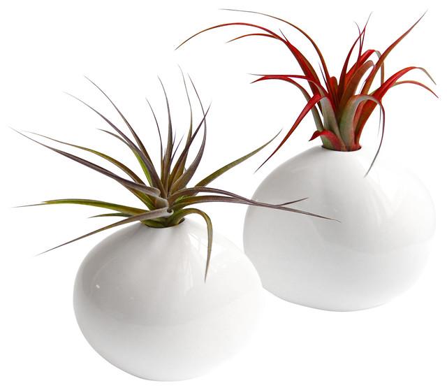 2-Piece Pebble Air Plant Set modern-plants