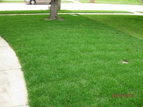New Sod Palisades Zoysia Watering Caring Advice
