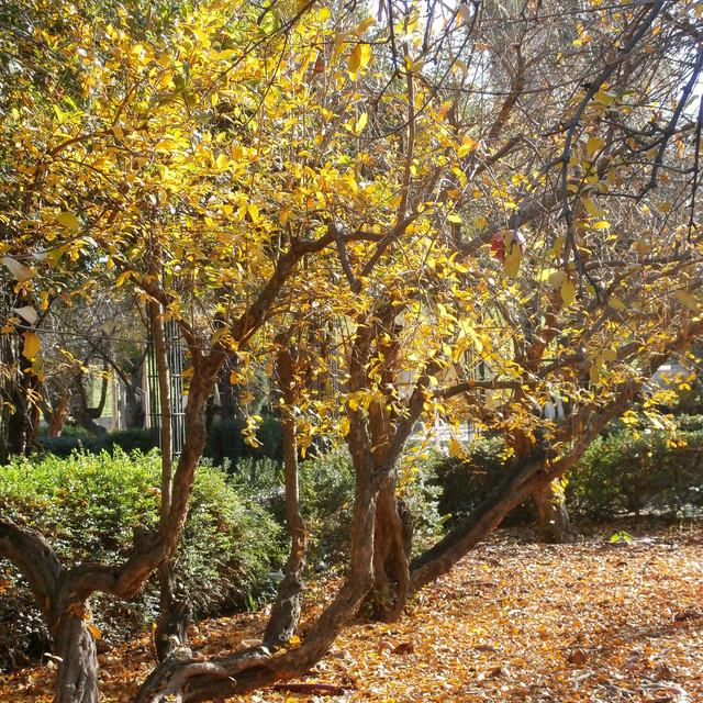 Jardines con encanto crea rincones rom nticos con for Jardines con encanto fotos