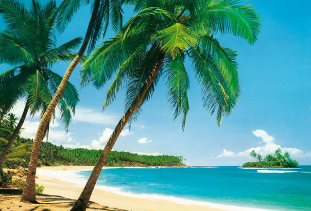 Isle Tropicale Mural 241 Tropical Wall Decals Part 94