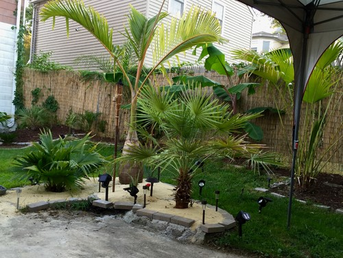 Backyard palm trees outdoor goods Home goods palm beach gardens