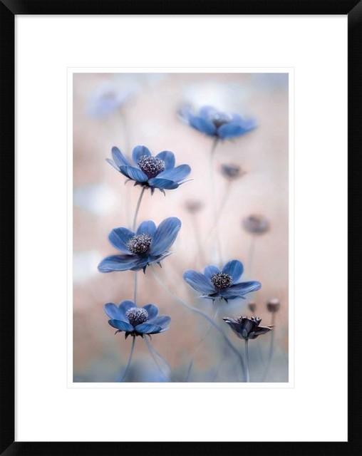 """Cosmos Blue"" Artwork, 17.2""x22"""