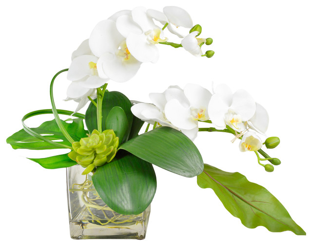 Phalaenopsis Orchid Arrangement in Vase  Contemporary  Artificial Flower Arrangements  by