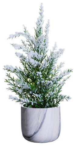 Rosemary Christmas Tree Home Depot.Snowy Pine Tree In Marblized Pot