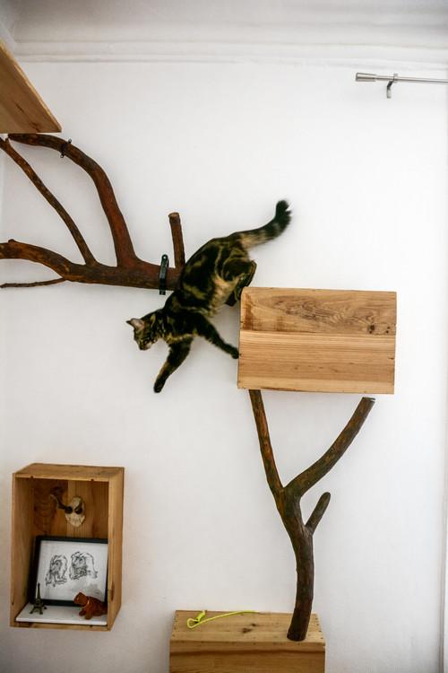 wandregal für katzen