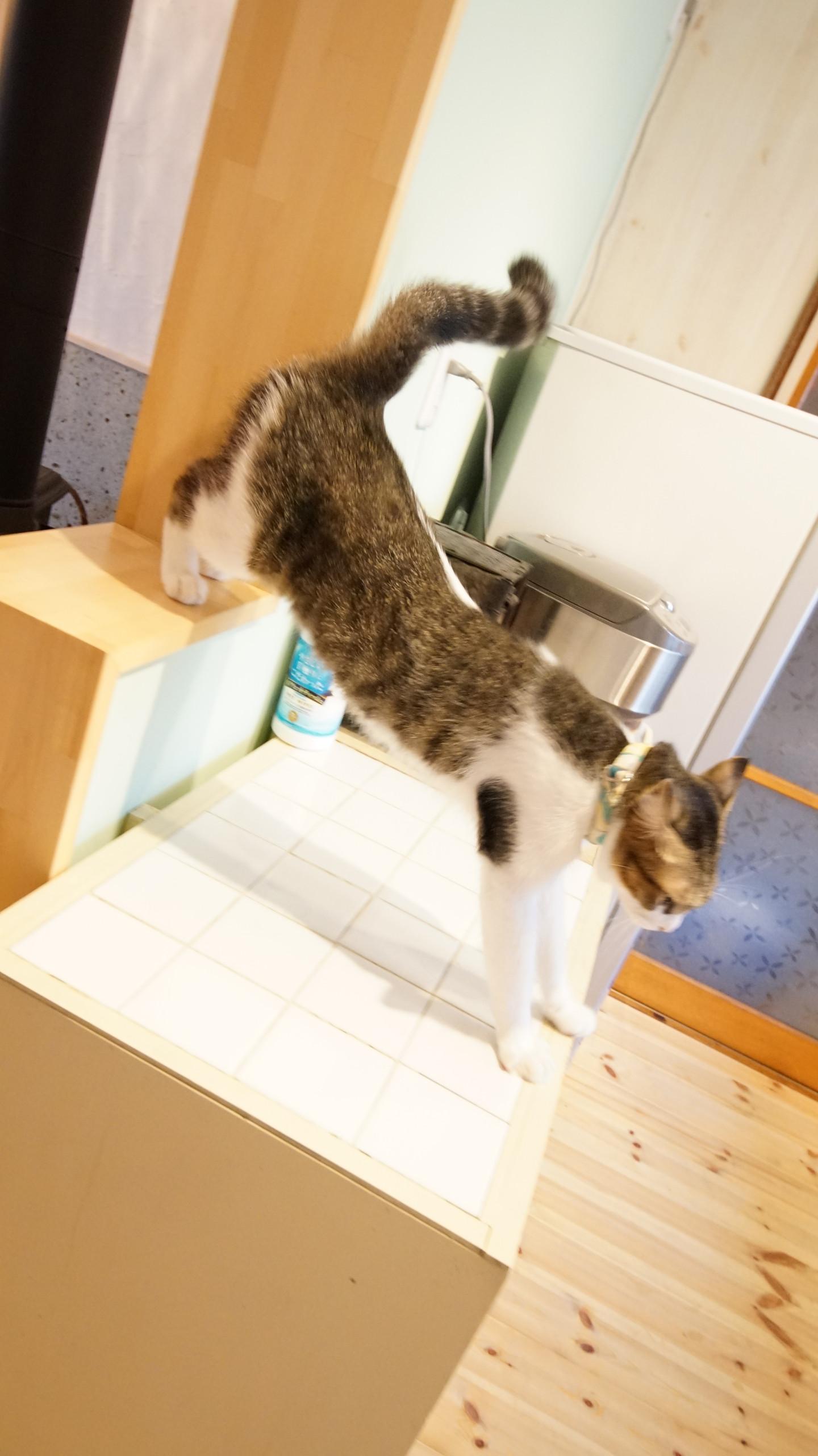 駒生の猫のいる平屋 中古+リノベ+DIYで家を楽しむ