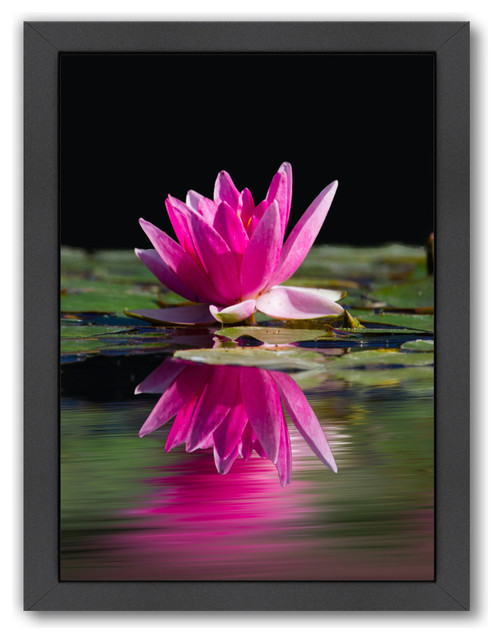 Pink Asia Lotus Flower 2 Asian Prints And Posters By Americanflat