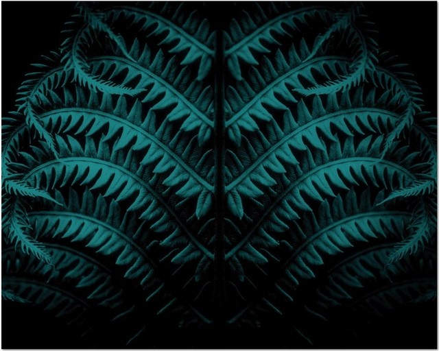 Dark Teal dark teal botanical print with a black background - prints and
