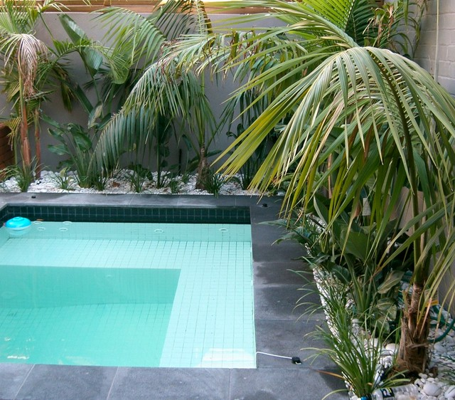 Plunge pool in small courtyard tropical melbourne by for Courtyard designs melbourne