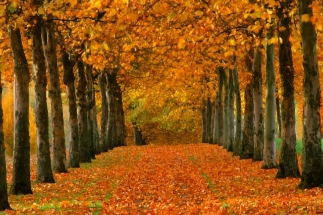 Autumn Forest Wall Mural palestencom