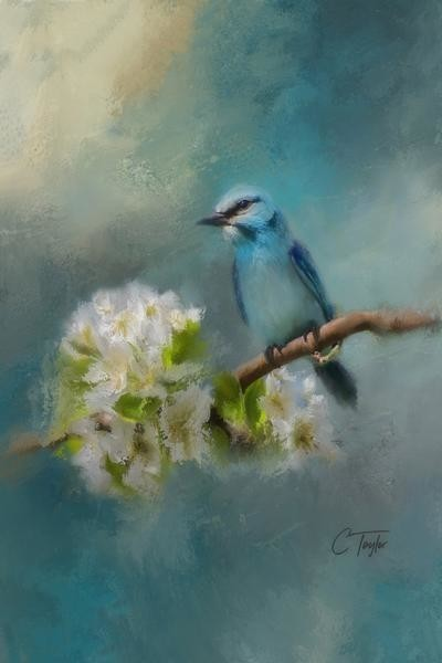 Blue Song Bird Painting Print On Wrapped Canvas Contemporary Prints And Posters By Marmont Hill