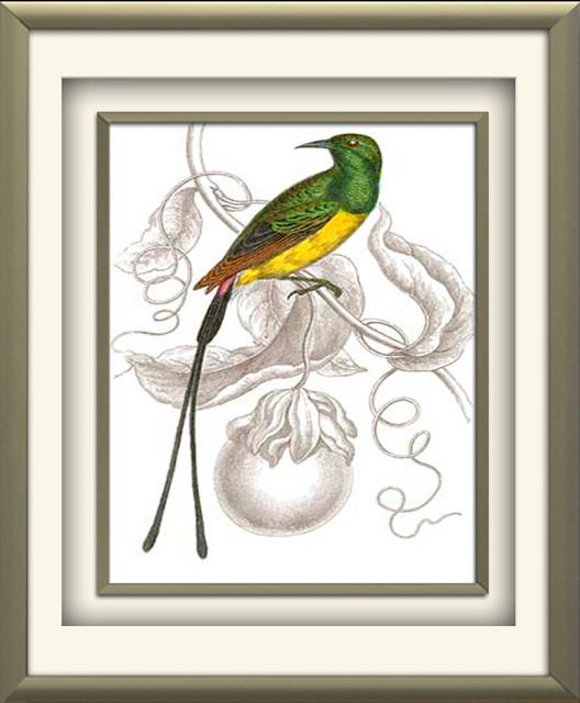 """jardine Hummingbird I"" By Sir William Jardine, Champagne Molding, 17""x21""."