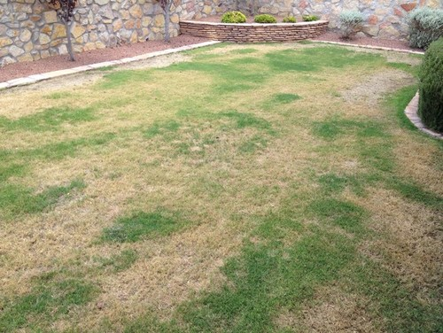 West texas bermudagrass lawn needs help for Care for new sod