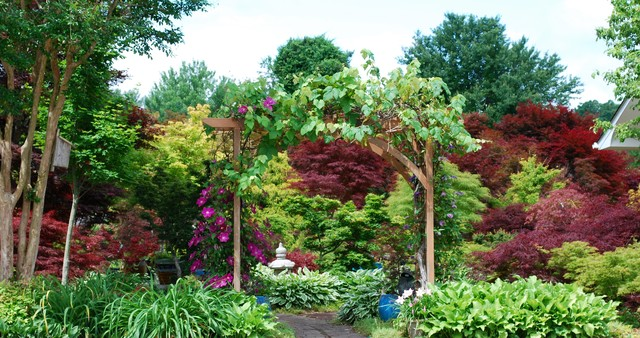 Mr Maple Display Garden Asian Charlotte By Jay
