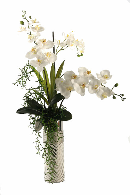 Cream Phael And Vanda Orchids In Silver Zebra Print Ceramic Planter