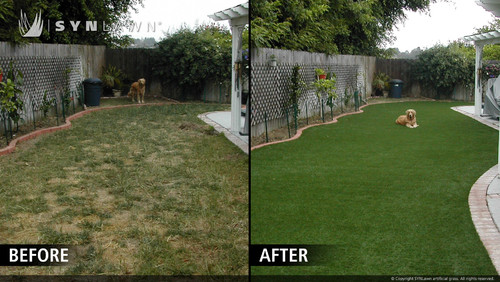 Hard Matted Grass What To Do