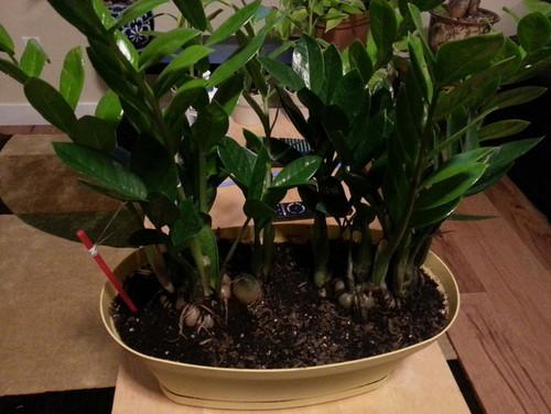 Zz Plant Soil Suggestion