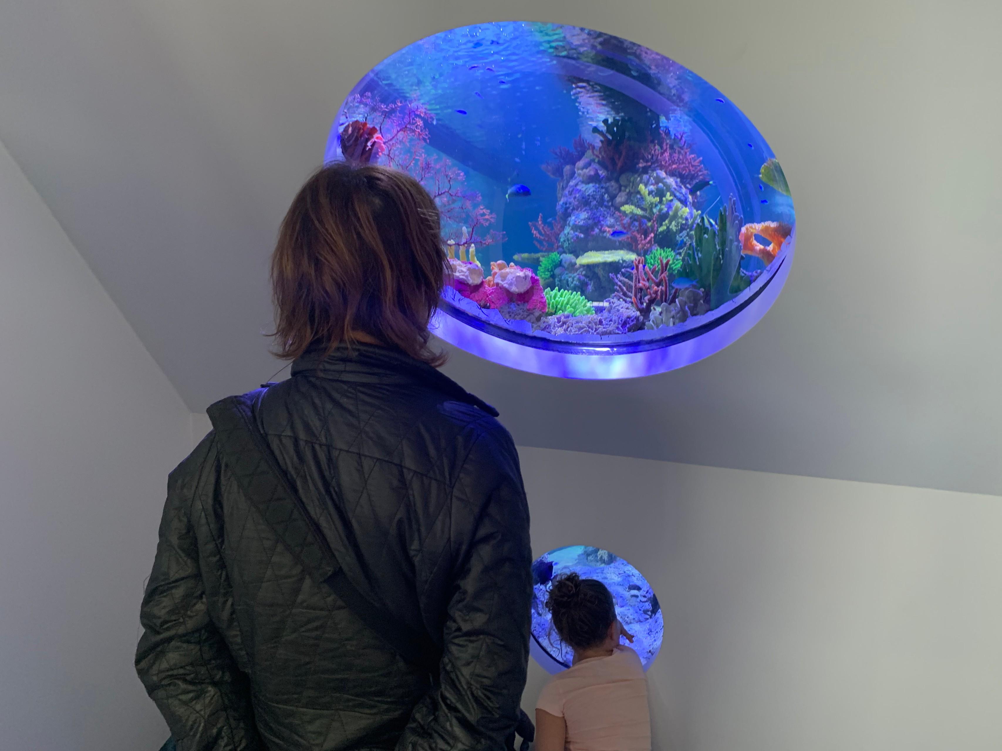 Aquarium - Whitsundays Airport