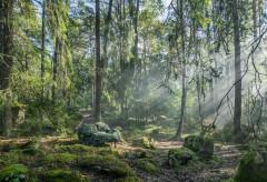 Тренды: Эффект леса и еще 9 трендов с выставок этого года