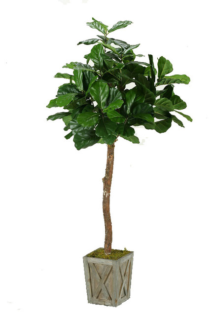 6 fiddle leaf fig tree in weathered wood box planter artificial plants and - Fiddle Leaf Fig Tree
