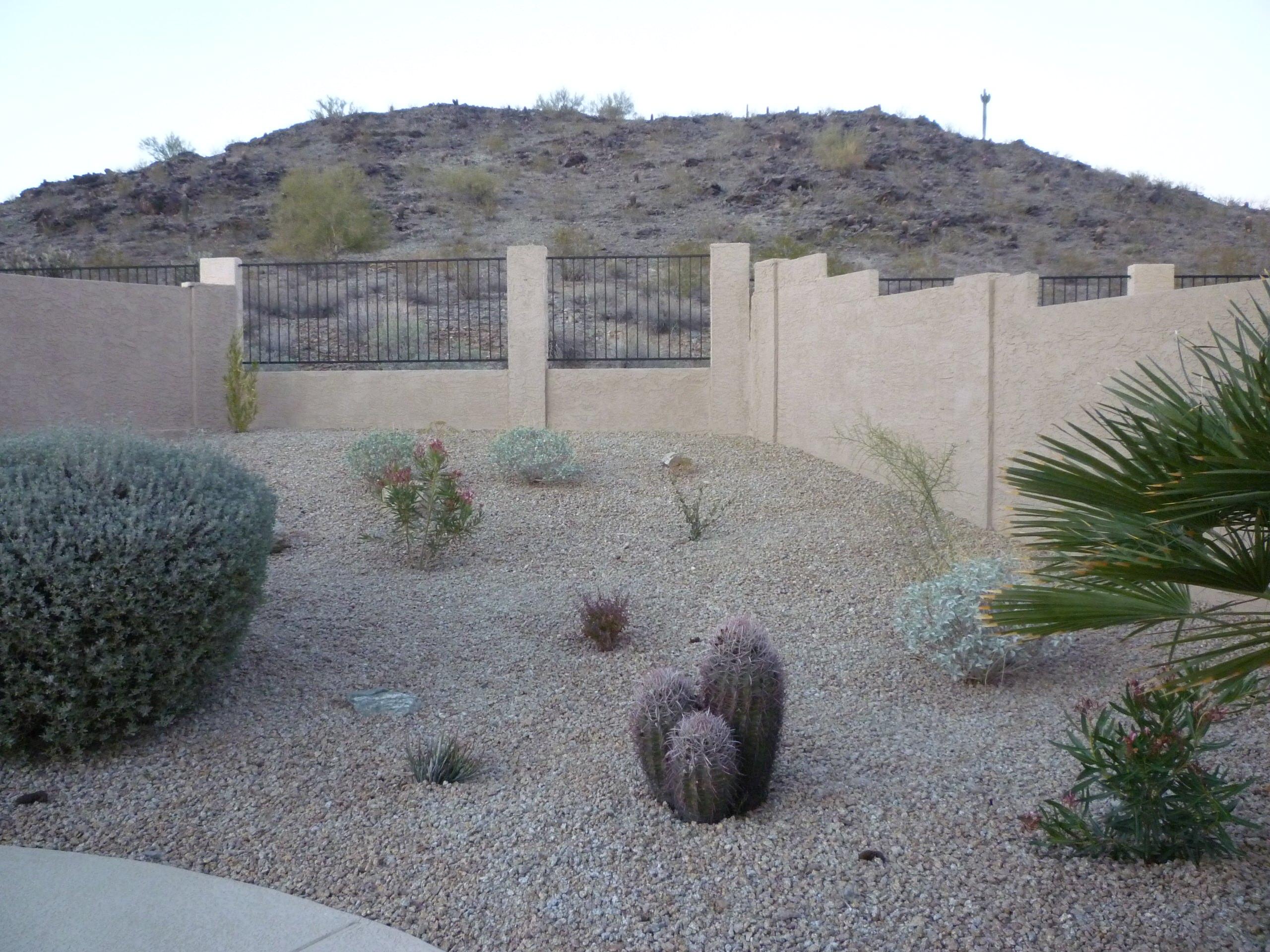 Backyard Desert Planting