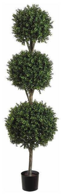 6 Foot Tall Triple Ball Boxwood Topiary Plant