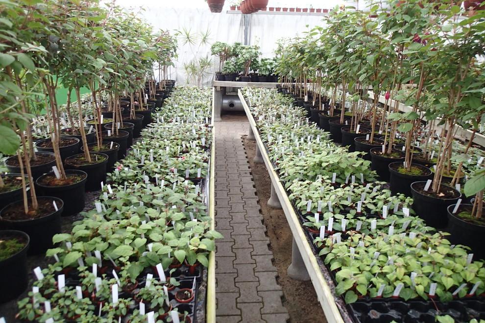 Din Lokale Planteskole