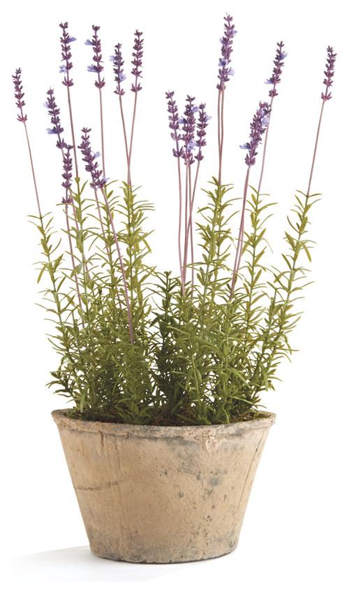 French Faux Lavender Plant