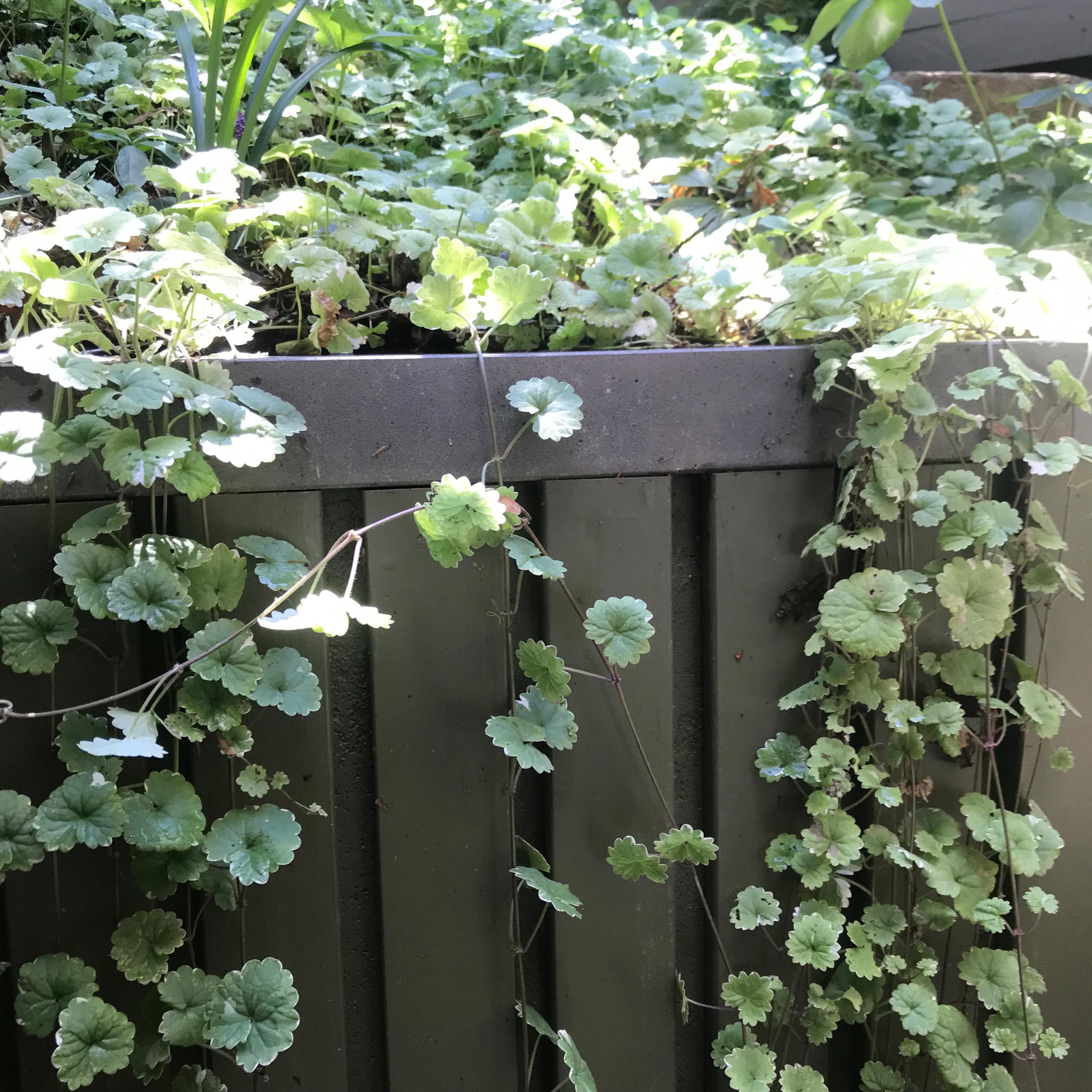 Clifton Hill 'Scarborough' Back Garden Planting