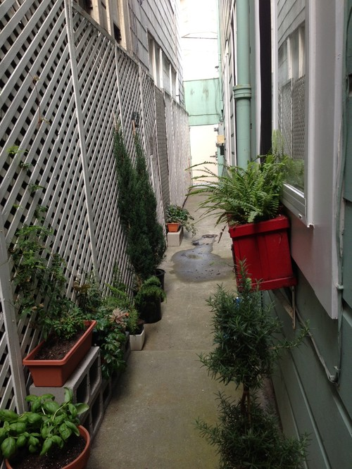 Ideas on what to do to this narrow walkway? on Small Walkway Ideas id=23559