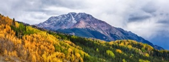 Trees On Mountains San Juan National Forest Colorado Contemporary Prints And Posters By Posterazzi