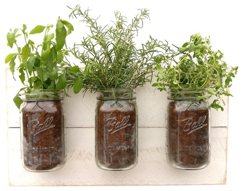 Mason Jar Wall Planter Shabby Chic
