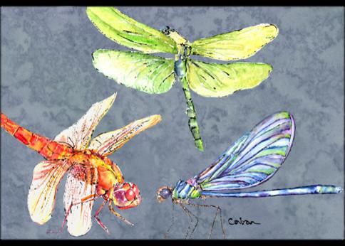 """Dragonfly Times Three Indoor/outdoor Doormat, 24""""x36""""."""