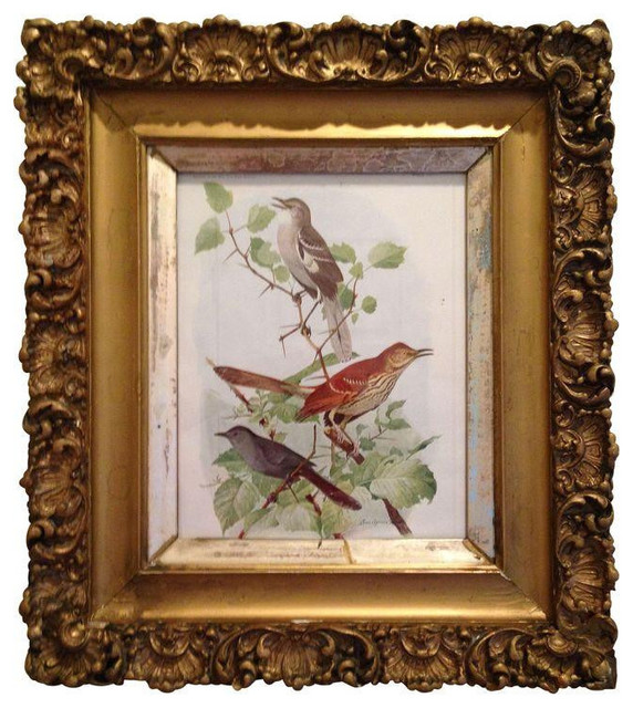 birds book plate print in gilded frame 625 est retail 350 on chairish