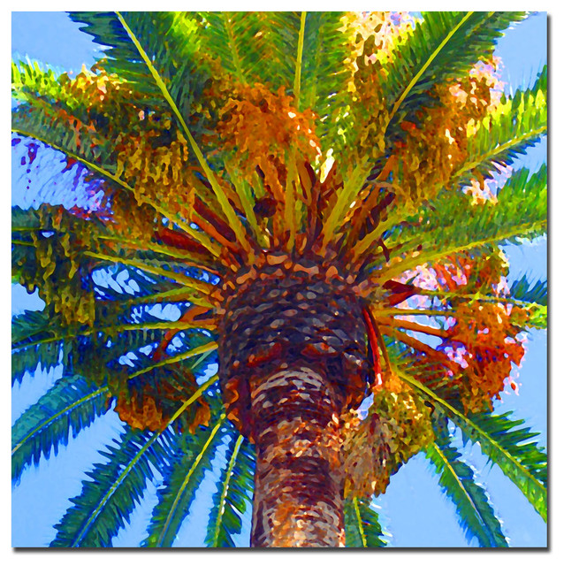 &x27;palm Tree Looking Up&x27; Canvas Art By Amy Vangsgard.