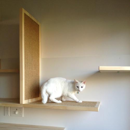 【Houzz】猫と人の幸せな暮らし:「福を招く猫」千葉ちゃんと「猫と建築社」の日常 16番目の画像